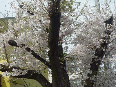 3月29日 園庭開放