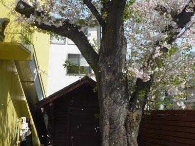 3月31日 園庭遊具のペンキ塗り